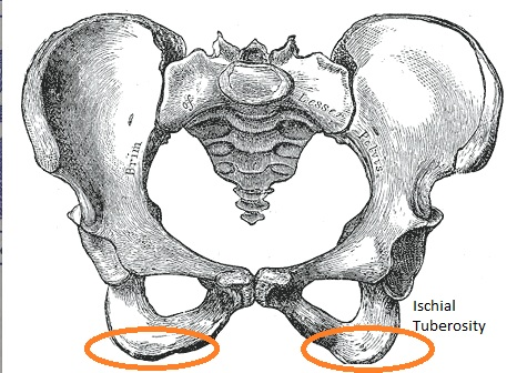 Pelvic ischial-tuberosity sitz bones