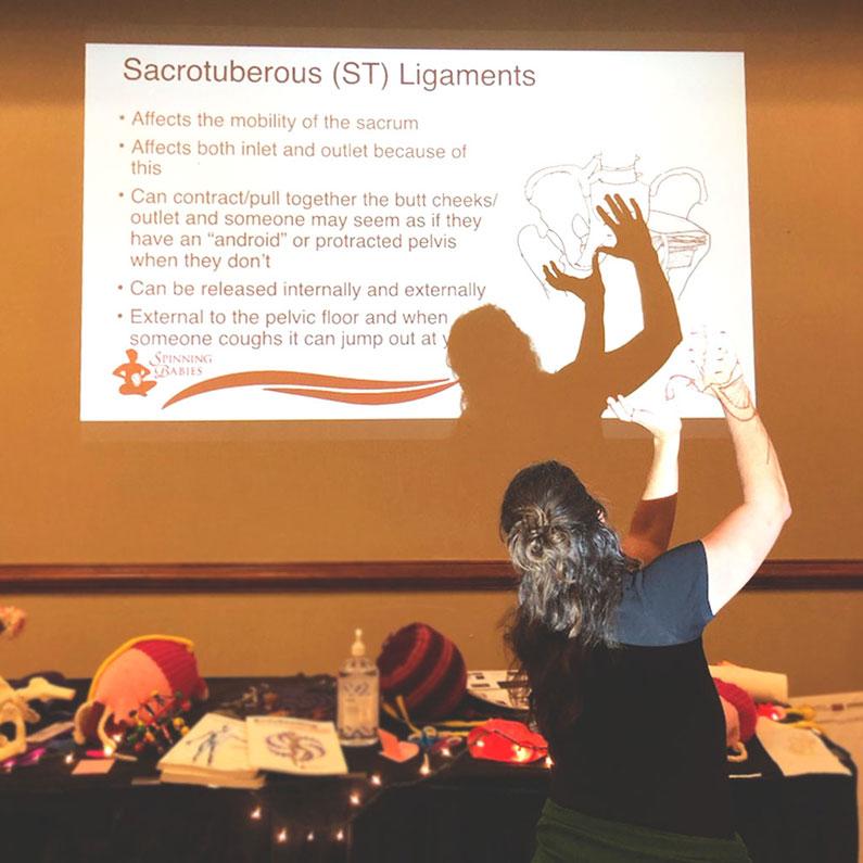 sacrotuberous ligaments